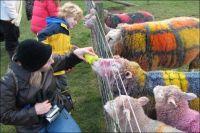 Tartan Dyed Sheep