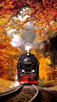 Train in autumn