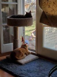 Stella & Bubba birdwatching