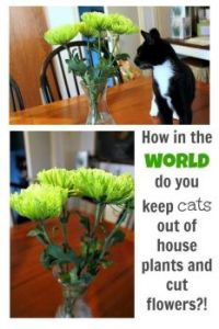 January 10th is National Houseplant Appreciation Day