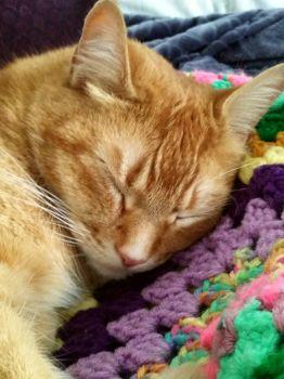 Wally pretending to sleeping!
