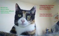 Cali my cat