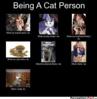 Being a cat person