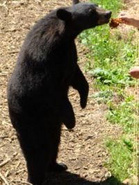 At the North American Bear Center