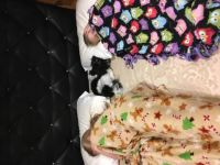 Charlee sleeping