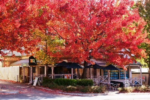 Adelaide Hills (The colors of autumn)