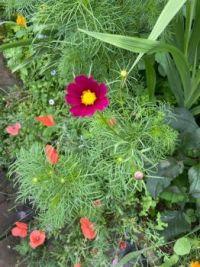 Wild flower delight