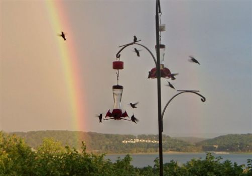 HUMMING BIRDS AND RAINBOW