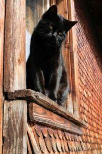 Beautiful Black Cat on Windowsill - Black Forest