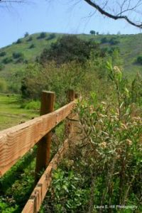 Fence at Carbon Canyon Regional Park