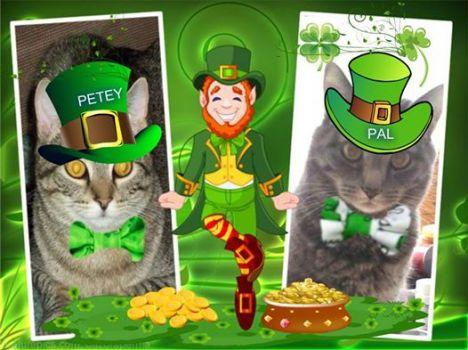 Petey & Pal say Happy St. Patrick's Day!