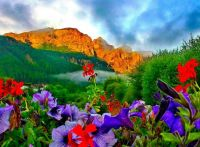 mountains & petunias landscape