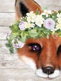 Peek a Boo Sweet Fox