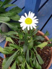 John's First Bloom