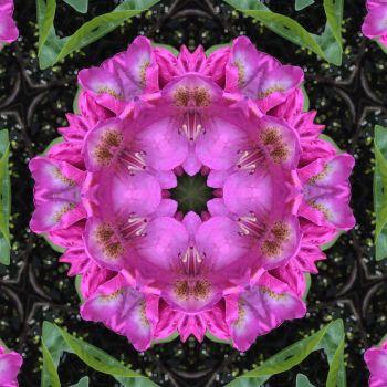 kaleidoscope 69 more pink medium