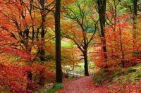 A lovely trek into the autumn woods