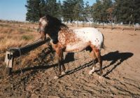 Buzzy-Colt I Raised