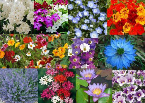 Flowers N