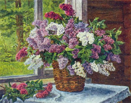 lilacs-by-the-window