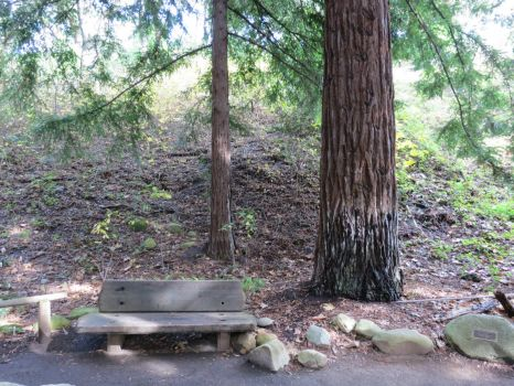 Bench and Redwood