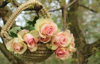Noble Roses Basket