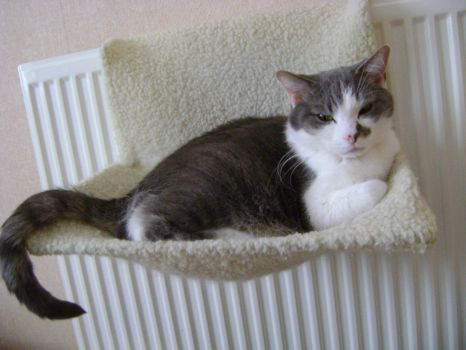 Ash - Snow? Who cares, I have a warm radiator!
