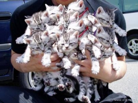Armful of cats for Janine and all cat lovers