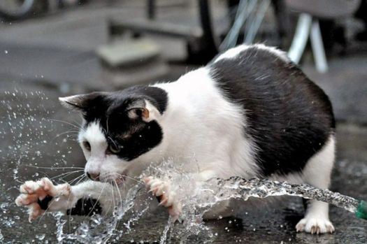 Cat playing in water
