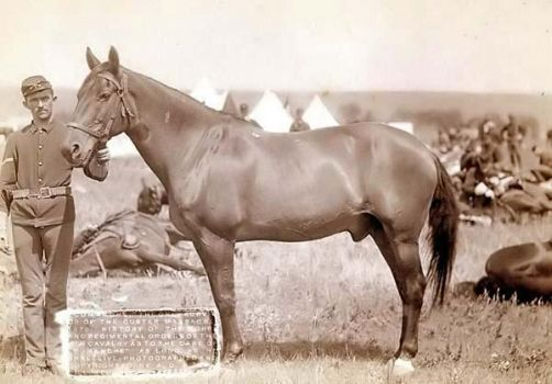 Comanche - Only survivor of Custer's Last Stand.