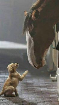 Howdy, Little Fellow