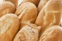 In bread cat.