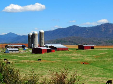 Tennessee, Mountains, Silos, Cows And Barns