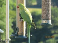 The Parakeets are becoming less timid.