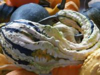 Autumn Wings gourd