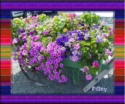 PURPLE FLOWER CART