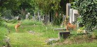 Rehe am Zentralfriedhof