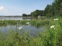 Wetland vegetation in the Hlásenec fishpond