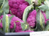 Gorgeous purple cauliflower