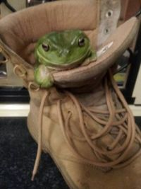 find another boot, this one is MINE