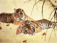 Beautiful Chinese tigers