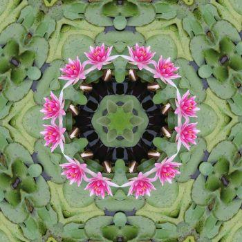 kaleidoscope 67 water lilies small