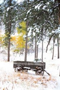 Wagon in the snow