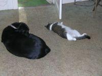 Sadie & Stretch