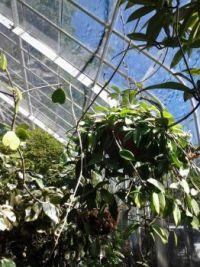 At the Seymour Conservatory, Tacoma WA