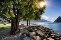 strom, kamene a more