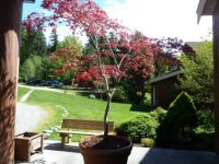 Part of a park setting on Vancouver Island