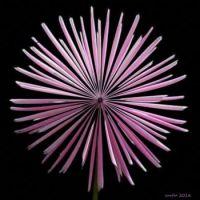 Digital flower.