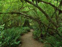 Hoh Rain Forest path, Olympic National Park