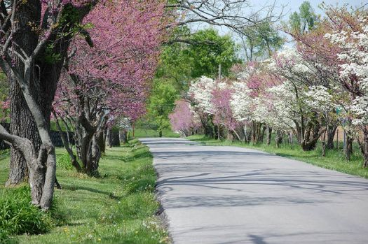 A Country Road in Spring