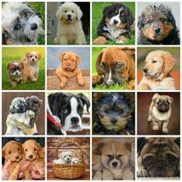 Cute doggies!!